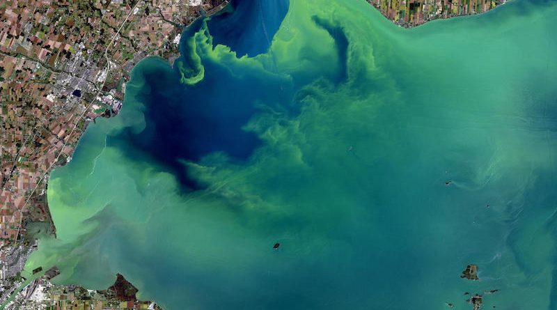 Ever Increasing Dead Zones Threaten U.S. Waters & Aquatic Life