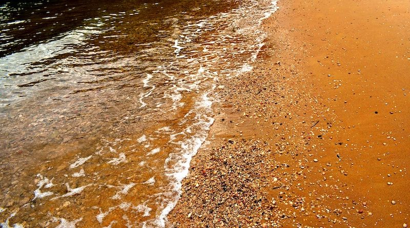 Brewing Company Uses Spent Grain to Tackle Red Tide