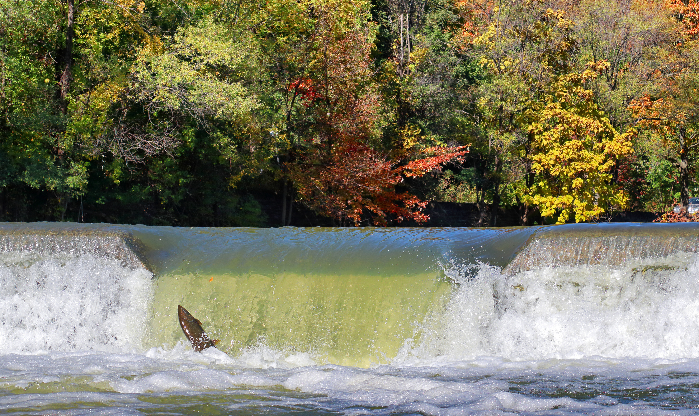 Ensuring water intakes are safe for local fish is critical for some drinking water facilities.